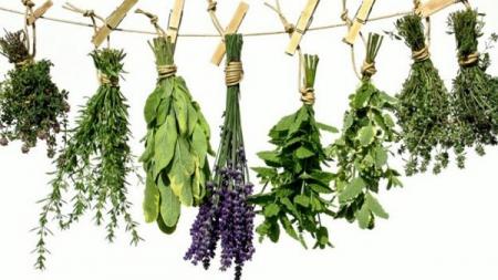 Πές μου τι έχεις να σου πώ τι βότανο να πάρεις… Μέρος Α
