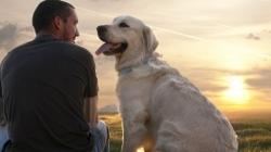 Σκύλος, ο πιο πιστός φύλακας του ανθρώπου!