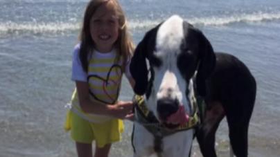 Κοριτσάκι περπατάει με την βοηθεία του σκύλου της