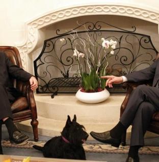 Ο ΛΙΟ ΗΤΑΝ Ο ΑΓΑΠΗΜΕΝΟΣ ΣΚΥΛΟΣ ΤΟΥ ΠΡΟΕΔΡΟΥ ΚΑΙ ΟΧΙ ΜΟΝΟ.. Πέθανε ο Λίο, ο σκύλος του Προέδρου της Δημοκρατίας
