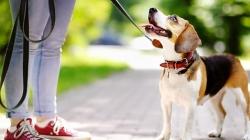 Σκύλος… ο καλύτερος προπονητής του ανθρώπου