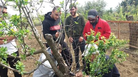 """Πρακτική άσκηση εμβολιασμού δένδρων των φοιτητών του Προγράμματος Σπουδών """"Κηποτεχνία"""" του KES College"""