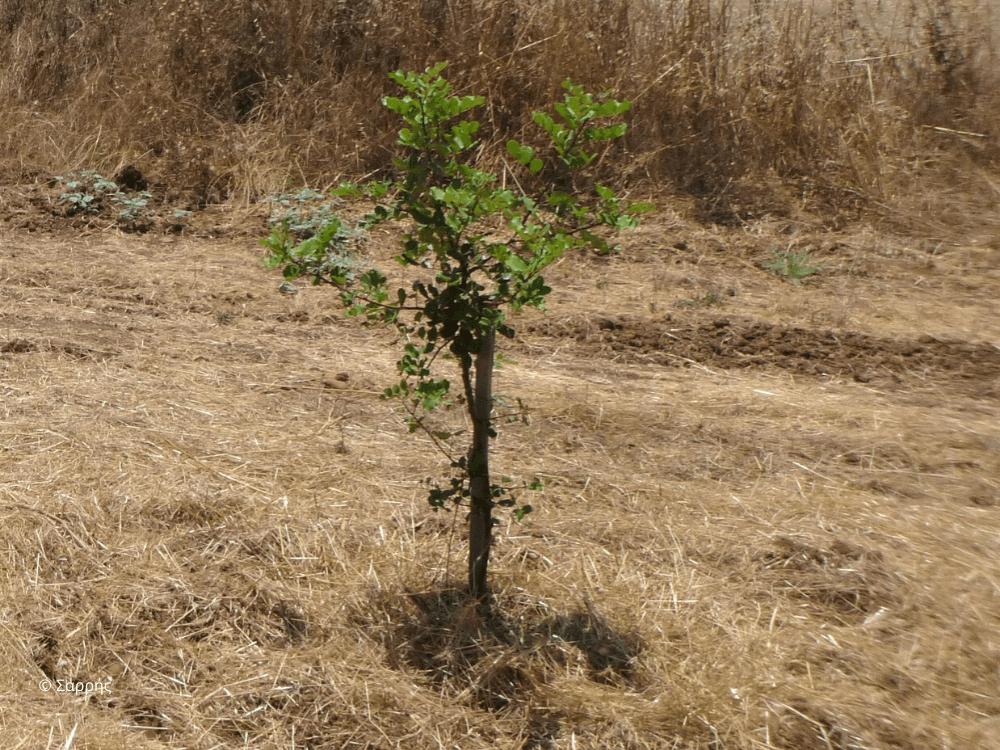 Προκαλεί η διαχείριση των γεωργικών εδαφών της Κύπρου ερημοποίηση;