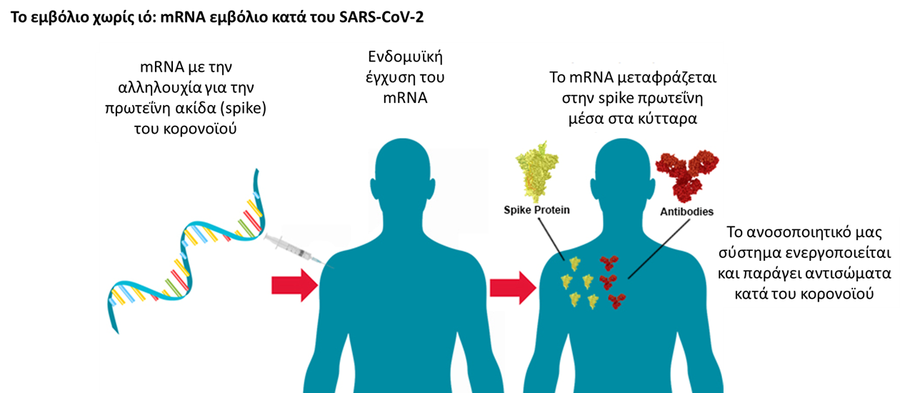 COVID-19: Τι είναι το mRNA εμβόλιο που υπόσχεται τόσα πολλά;