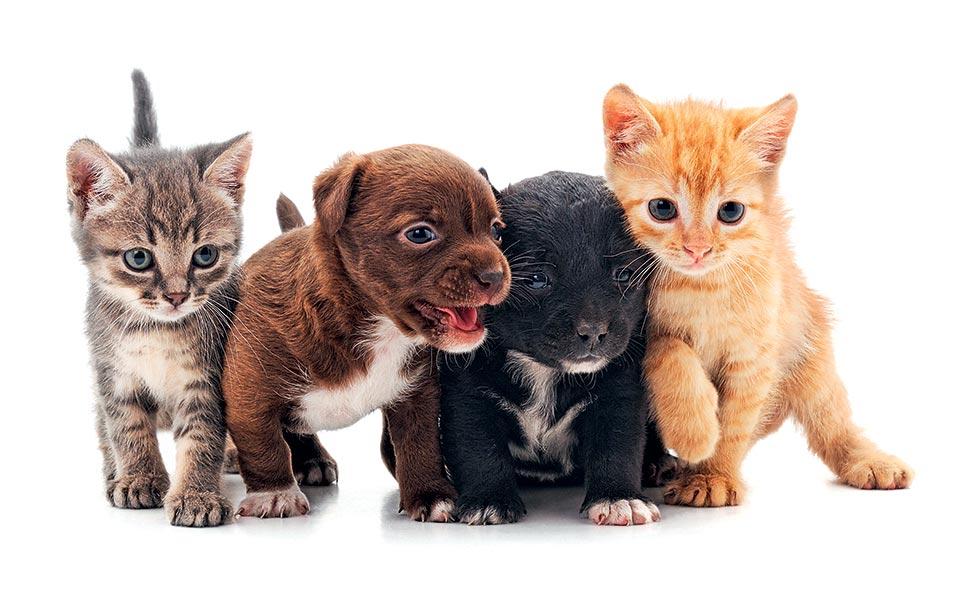 Τα ζώα είναι η ενσάρκωση της αγάπης!