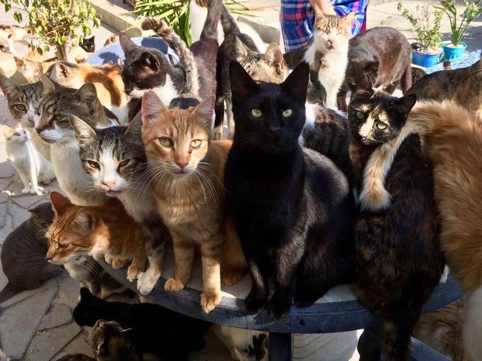 Ιερό καταφύγιο για γάτες στον Άγιο Νεόφυτο Πάφου!